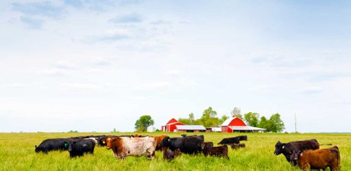 Agricultural Innovation Prize Seeks Ideas to Enhance Food Systems