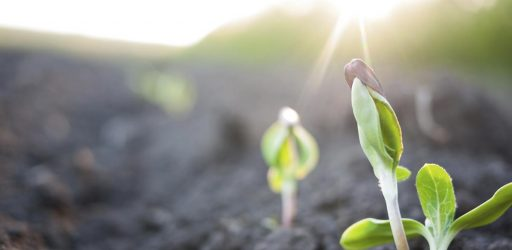 Winning Ag Prize Teams Address Global Food System Challenges, from Food Spoilage to Hunger