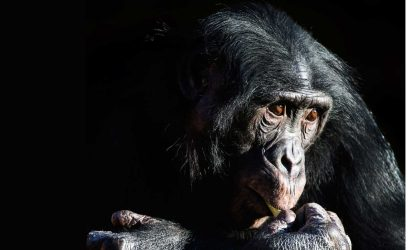 Intersections at WID: Primatologist Frans de Waal on the Science of Cooperation and Empathy