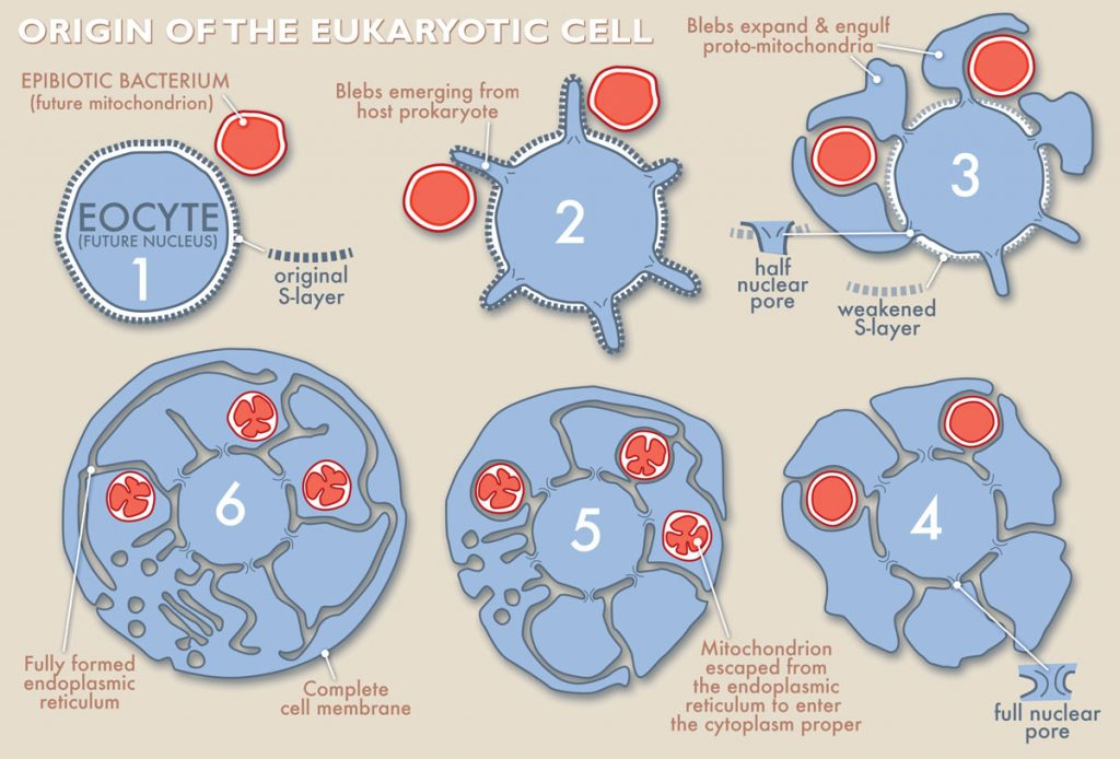 Cell evolution graphic courtesy University of Wisconsin-Madison