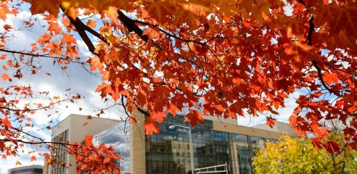 Aging Leaves: How Epigenetic Regulation Gives Rise to the Signature Colors of Fall