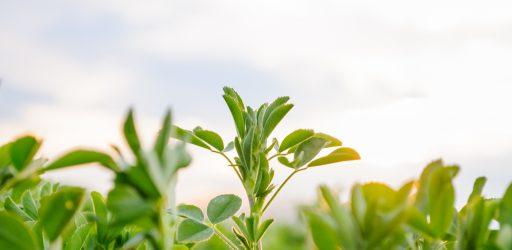 Weaning Crops from Nitrogen Fertilizers: Examining Evolution's Innovations