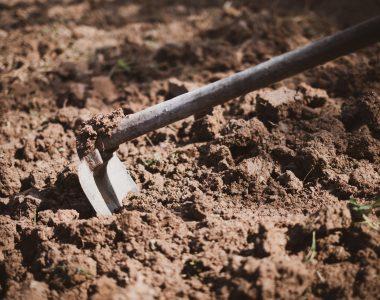 Handelsman Talks Soil on Podcast & WUWM